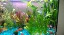 Видео от подписчика 34 Мой аквариум 2 спустя 9 месяцев после запуска