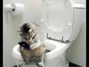 Обалденно смешные кошки! Подборка приколов с котами и кошками