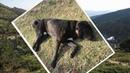 Парень нашёл в горах безжизненную собаку с телефоном на ошейнике! Набирая номер, он не представлял