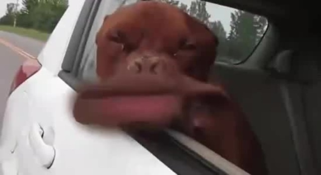 Scatman's dog