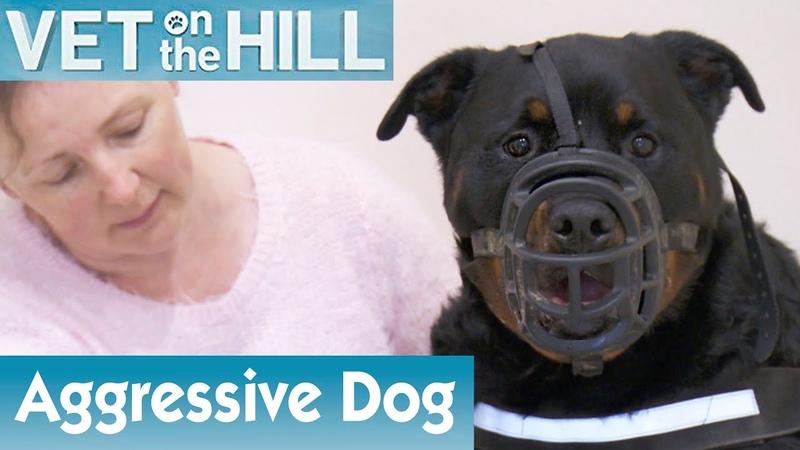 Ветеринар на холме Очень агрессивная собака в наморднике 2 сезон 3 серия Extremely Aggressive Dog Is Masked S02E03 Vet On The Hill