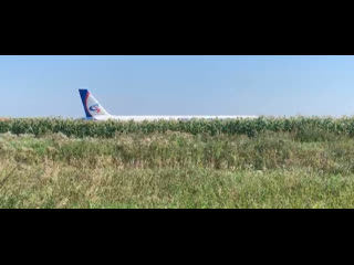 """Самолёт с пассажирами сел на """"брюхо"""" в кукурузное поле в подмосковье"""