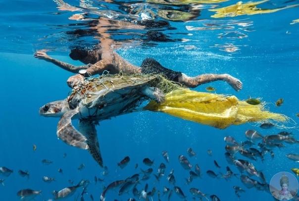 Ужасающие снимки на тему «Экологии»