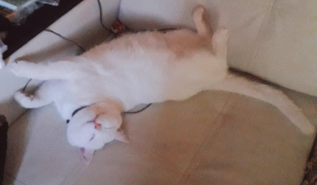 А ваши коты спят верх лапками?