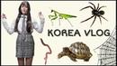 София в юбке и новая черепаха KOREA VLOG
