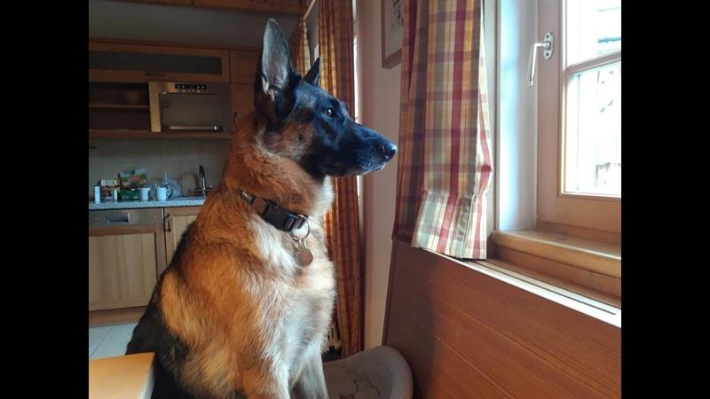 Селимся с овчаркой и британской кошечкой в двухэтажный дом от Hagan Lodge