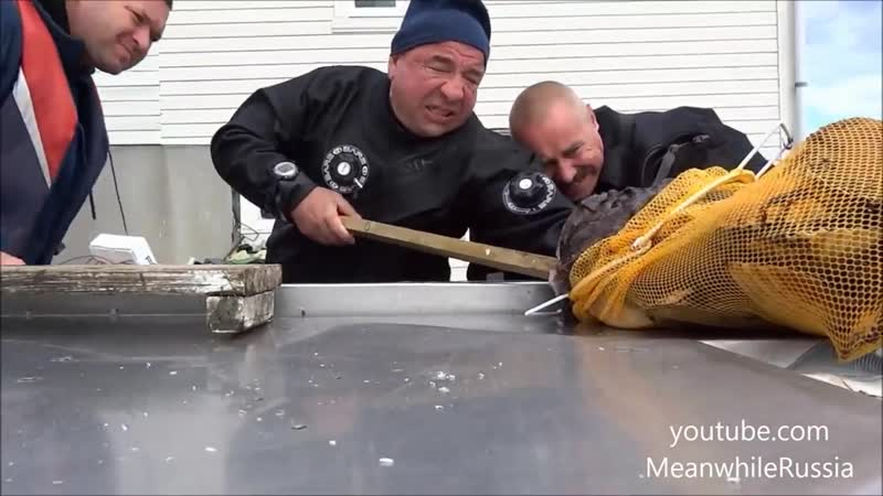 In Russia Fish Catches You Monkfish HD 1280x720 Mp4