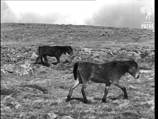 Dartmoor AKA Dartmoor Scenes (1948)