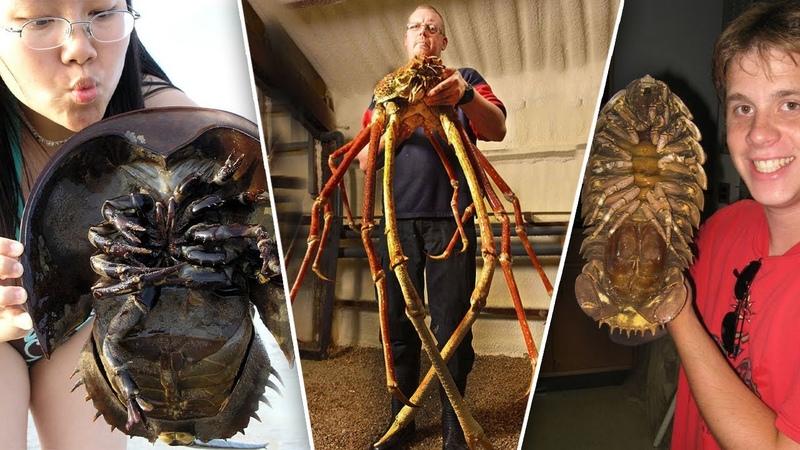 ТОП 10 самых ГИГАНТСКИХ ЖУКОВ в мире насекомые переростки