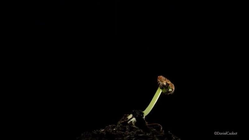 Прорастание_семени.__Seed_germination_!.mp4