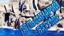 Georgia Batumi , Дельфинарий Батуми , Супер шоу дельфинов , Грузия, Отдых в Батуми , ბათუმის დელფინა