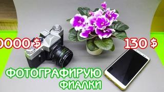 Как я фотографирую фиалки для социальных сетей | Советы по уходу за фиалками | Мои фиалки #25