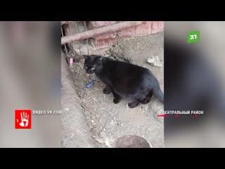 Больше десятка кошек оказались заперты в подвале многоэтажке. По словам местных комменальщики заварили все окна и отверстия.