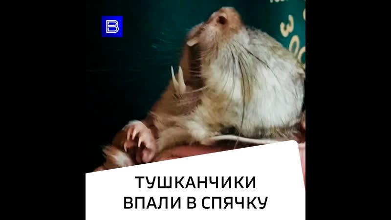 В Московском зоопарке уснули тушканчики