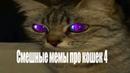 Смешные мемы про кошек 4