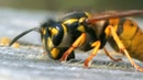 Facts About Bees 🐝 Secret Nature Bee Documentary Natural History Channel