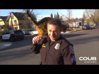 Cat beats up the cop