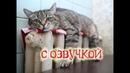 Приколы с котами с ОЗВУЧКОЙ! САМОЕ СМЕШНОЕ ВИДЕО – Угар до СЛЁЗ! - PSO