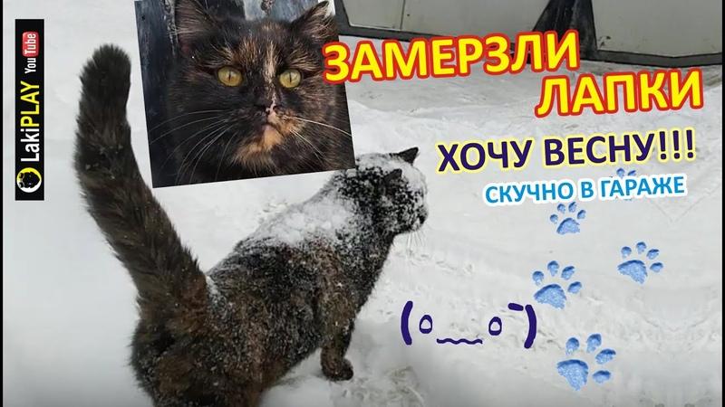 Кошка Первый раз Вышла на УЛИЦУ ~ РЕАКЦИЯ на СНЕГ Замерзли Лапки Ругается 3 В гараже скучно