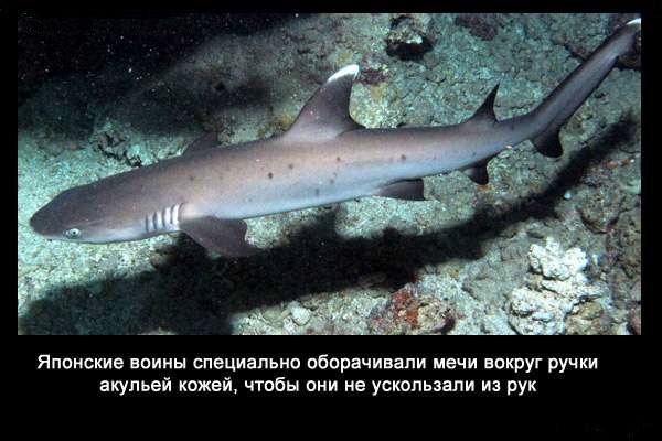 Valteya - Интересные факты о акулах / Хищники морей.(Видео. Фото) - Страница 2 Kw1bQYMKyAY