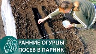 ☘ Посадка огурцов в парник семенами для получения раннего урожая