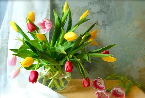 Тюльпаны: приметы и поверья, к чему снятся