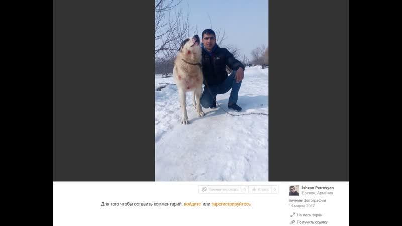 Գյումրիում շանը քարշ է տվել մեքենայի հետեւից. առանձնակի դաժանություն