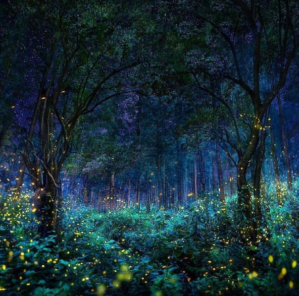 Святилище светлячков