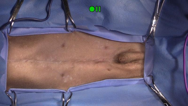 Диагностическая лапаротомия у собаки с инвагинацией Exploratory Laparotomy Canine Intussusception