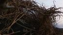 Открытие весенней охоты на гуся под Вологдой