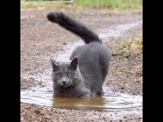 Котик в луже