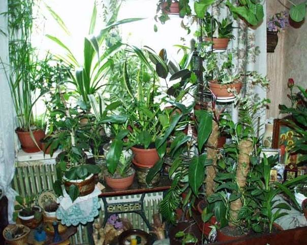 РАСТЕНИЯ ДЛЯ ИДЕАЛЬНОГО МИКРОКЛИМАТА В ДОМЕ Многие не догадываются о невероятной способности домашних растений влиять на микроклимат. Растения создают комфортную атмосферу, стабилизируют