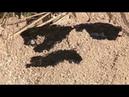 Новости Тулы в Комарках из под земли продолжает вытекать нефтесодержащее вещество