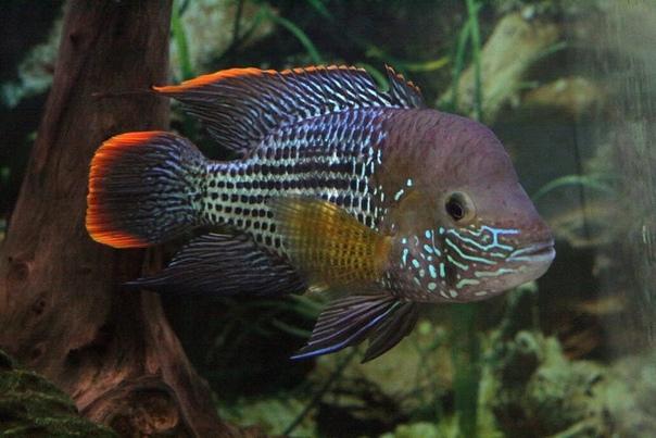 картинки александра рыбки