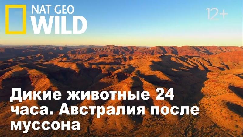 Nat Geo Wild: Дикие животные 24 часа. Австралия после муссона / Wild 24.