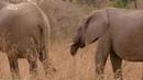 «Африканские охотники (08). Братья по оружию» (Познавательный, природа, животные, 2018)