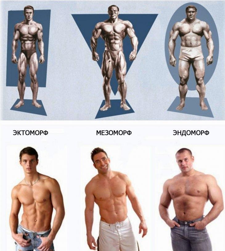 Типы телосложение в картинках