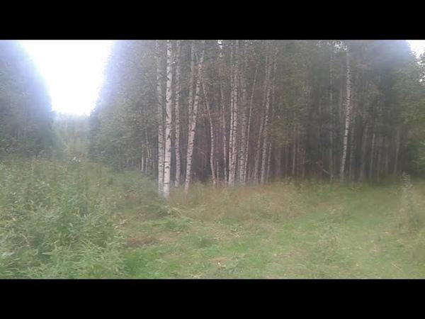 Заросшее лесом поле Груздовиха в Устьянском районе Архангельской области август 2020 год