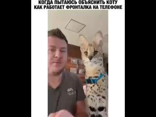Кошки фото видео (480p)
