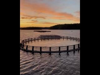 Video by Форелевая ферма Алдога