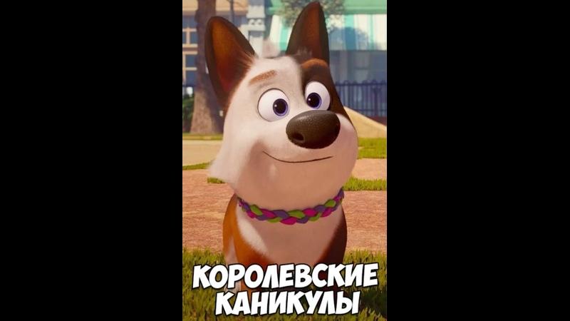 Kopoлeвскиe Kaникyлы 2020