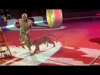 Новогодние пытки животных в цирке. Зритель оплачивает это, покупая билет в цирк
