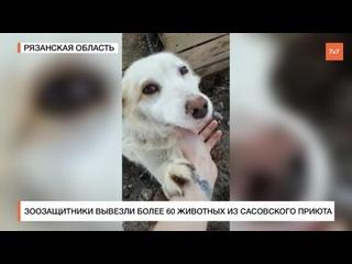 Спасение собак | Зоозащитники вывезли более 60 животных из сасовского приюта в Рязанской области  Смотреть позже  Поделиться