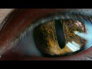 LUCY - Tori Amos - Sweet the Sting - HD 720p