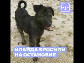 Бросили щенка на остановке