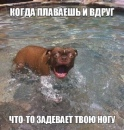 Фотоальбом Алексея Долгошеева