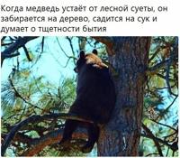 Элеонора Смеренова-Браиловская фото №10