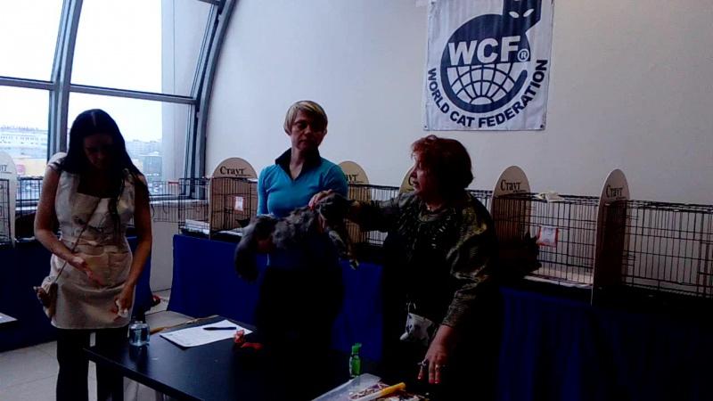 Выставка кошек « В гостях у «САФФИ» – 25 лет в WCF» 4 – 5 марта 2017 г.Санкт-Петербург, WCF
