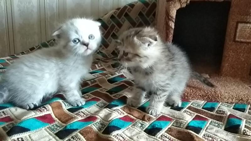 Малыши Лизы и Персика