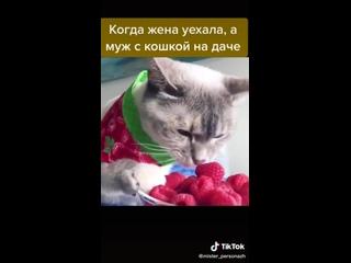 Даже коты начинают переходить на вегетарианство ))